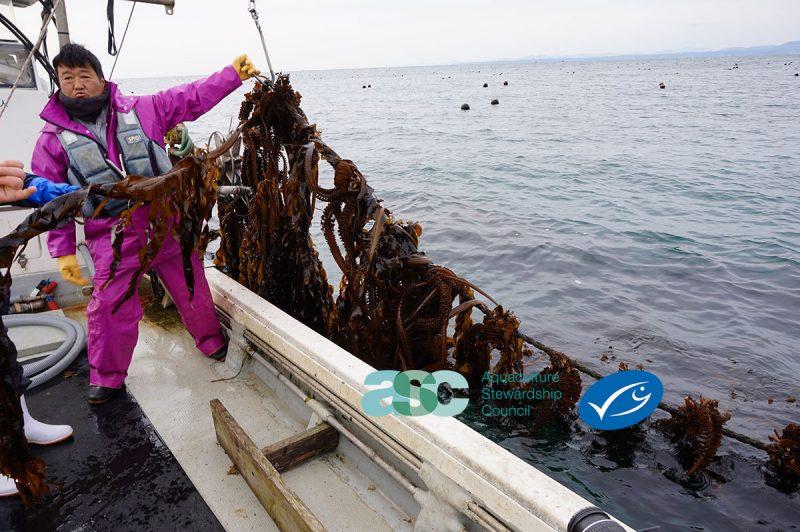 MEdia Seaweed