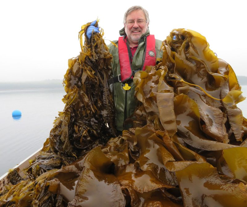 r. Thierry Chopin with the two species of kelps cultivated at the Magellan Aqua Farms Inc.